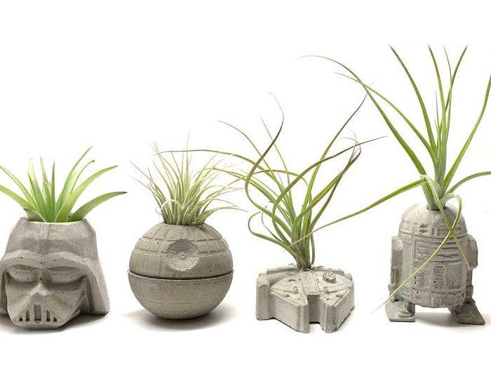 Bomboniera alternativa 7: esempi di Air Plants